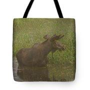 Bull Moose Looking Around  Tote Bag