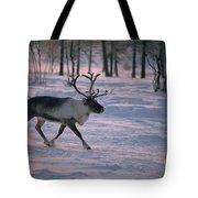 Bull Reindeer In  Siberia Tote Bag