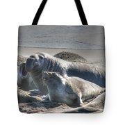 Bull Seal Tote Bag