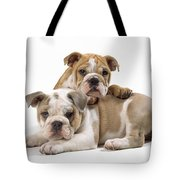 Bulldog Puppies, One On Top Of The Other Tote Bag