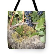 Bunches Of Red Wine Grapes Growing On Vine Tote Bag