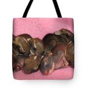 Bunny Baby Boom Tote Bag