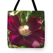 Burgundy Clematis Profile   # Tote Bag