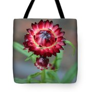 Burgundy Straw Flower Tote Bag