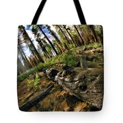 Burnt Tree In A New Forest. Tote Bag