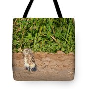 Burrowing Owl IIi Tote Bag