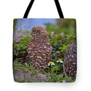 Burrowing Owl Siblings Tote Bag