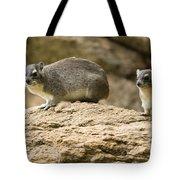 Bush Hyrax  Tote Bag