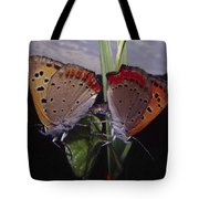 Butterfly 001 Tote Bag