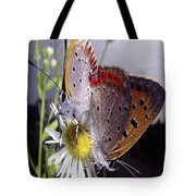 Butterfly 002 Tote Bag