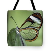 Butterfly 005 Tote Bag
