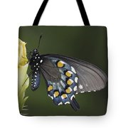 Butterfly 016 Tote Bag