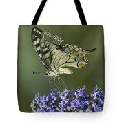 Butterfly 020 Tote Bag