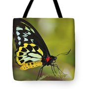 Butterfly 022 Tote Bag
