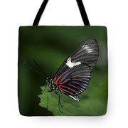 Butterfly 027 Tote Bag