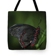 Butterfly 028 Tote Bag