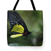 Butterfly 029 Tote Bag