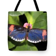 Key West Butterfly 3 Tote Bag