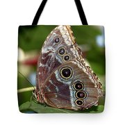 Butterfly 4 Tote Bag