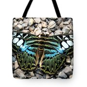 Butterfly Amongst Stones Tote Bag