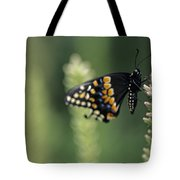 Butterfly E. Black Swallowtail Tote Bag