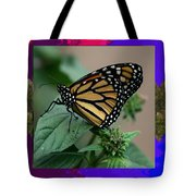 Butterfly Gold Photograph Insect Taken At Costa Rica Travel Vacation Unique Digital Painted Border B Tote Bag