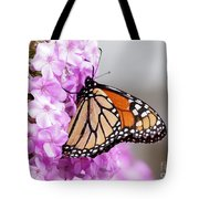 Butterfly On Phlox Flowers Tote Bag