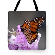 Butterfly On Phlox Tote Bag