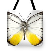 Butterfly Species Cepora Judith  Tote Bag