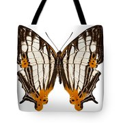 Butterfly Species Cyrestis Lutea Martini Tote Bag