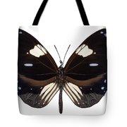 Butterfly Species Euploea Radamanthus Common Name Magpie Crow Tote Bag