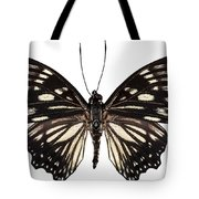Butterfly Species Euripus Nyctelius Euploeoides  Tote Bag