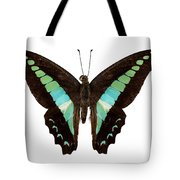 Butterfly Species Graphium Sarpedon Tote Bag