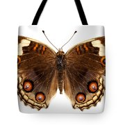 Butterfly Species Junonia Orithya  Tote Bag