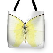Butterfly Species Phoebis Statira  Tote Bag