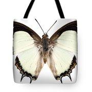 Butterfly Species Polyura Jalysus Tote Bag