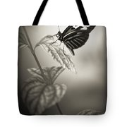Butterfly Warm Black And White Tote Bag