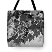 Bw Hanging Thompson Grapes Sultana Poster Look Tote Bag