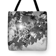 Bw Lens Flare Hanging Thompson Grapes Sultana Tote Bag