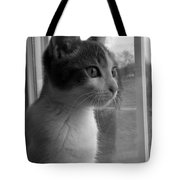 Bw The Inquisitive Kitty Jackson Tote Bag