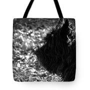 Cairn Head Study Tote Bag