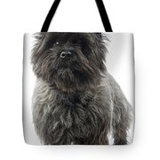 Cairn Terrier Dog Tote Bag