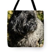 Cairn Terrier Portrait Tote Bag