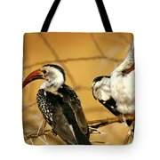 Calao A Bec Rouge Tockus Erythrorhynchus Tote Bag