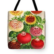 Calceolaria From A Vintage Belgian Book Of Flora. Tote Bag