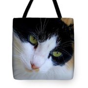 Calico 1 Tote Bag