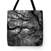 California Black Oak Tree Tote Bag