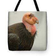 California Condor Big Sur Tote Bag