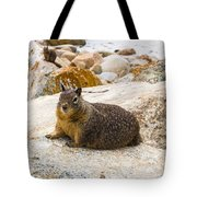 California Ground Squirrel With Sandy Nose Tote Bag