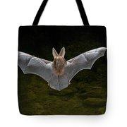 California Leaf-nosed Bat Tote Bag